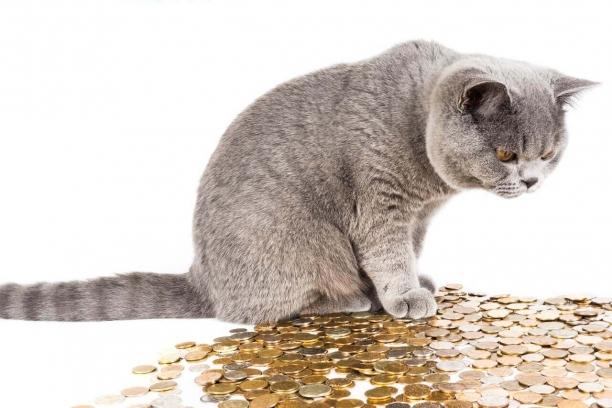 cat-1099697_1280